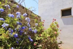 I fiori di Masseria Pizzo